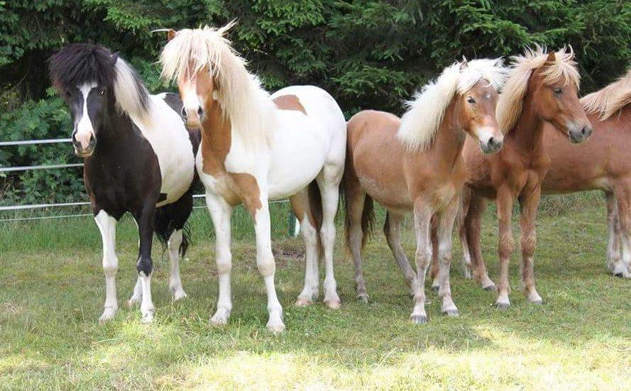 Eva Pferde